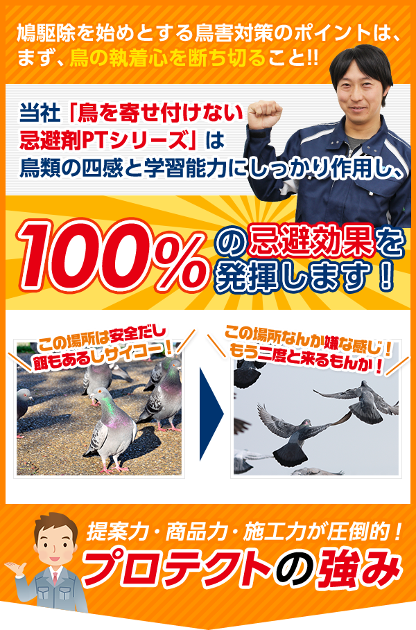 鳩駆除を始めとする鳥害対策のポイントは、まず、鳥の執着心を断ち切ること!!