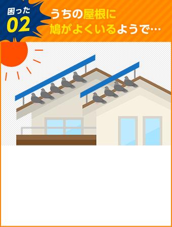 うちの屋根に鳩がよくいるようで…